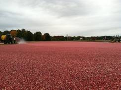 Image for Cranberry Highway