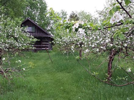 Image for Log Cabin Orchard
