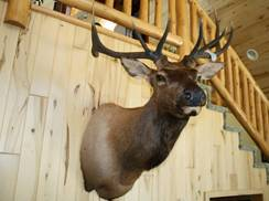 Image for North Fork Taxidermy