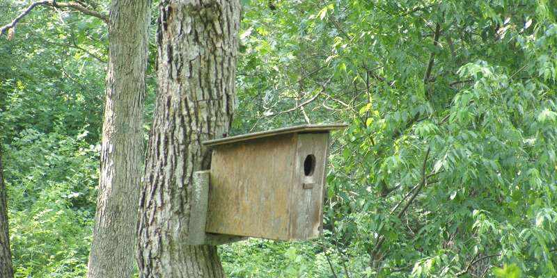 Birdhouse at Seno Woodland Education Center