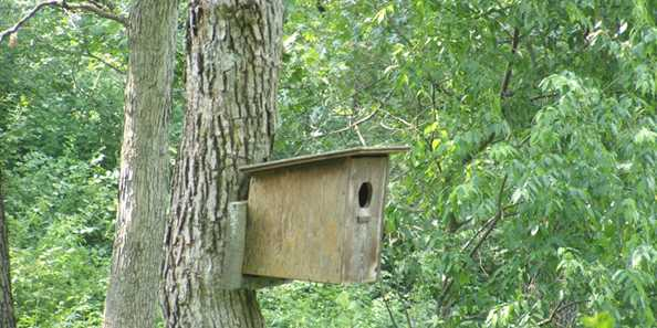 Birdhouse at Seno K/RLT Conservancy
