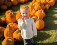 Got Pumpkin? Great Eats, Fests and Farms for Fall